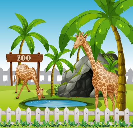 Giraffes in azoo enclosure illustration