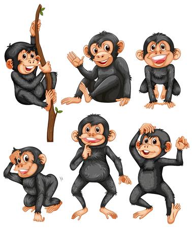 Eine Reihe von Affen auf weißer Hintergrundillustration