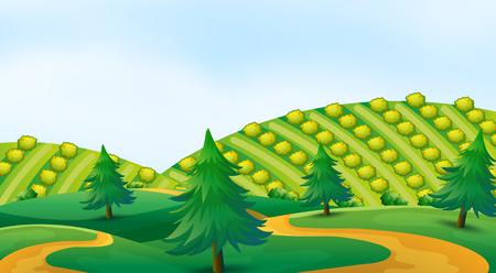 Coltivazione in illustrazione di terrazze da banco