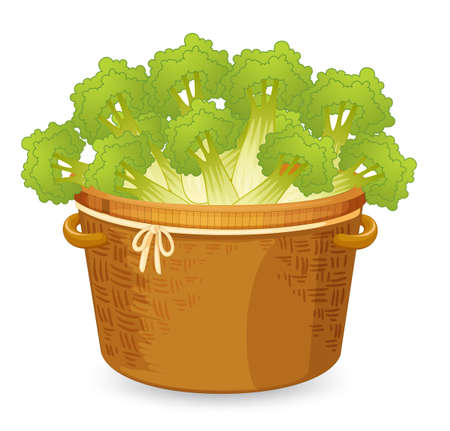 Celery in basket weave illustration