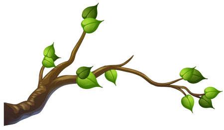 Tree branch on white background illustration Reklamní fotografie - 121751543