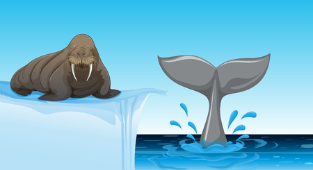 A walrus on ice floe illustration