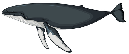 A whale character on white background illustration