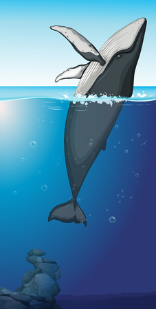 A humpback whale in the ocean illustration Stock Vector - 113822997