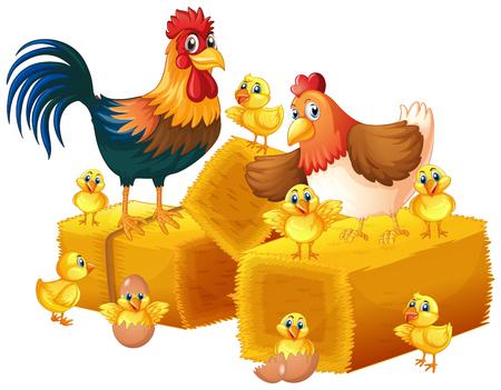 Chicken family on white illustration