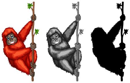 Set of orangutan character illustration