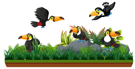 Toucan in isolated nature illustration
