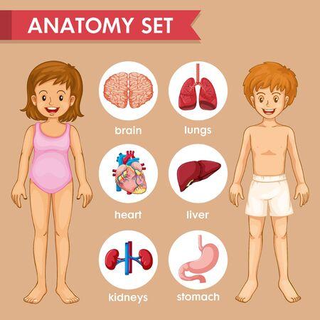 Scientific medical illustration of kids organs illustration Illustration