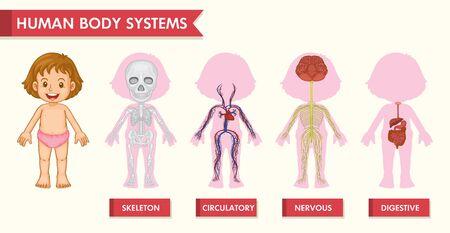 Scientific medical illustration of girl human systems illustration Vector Illustration