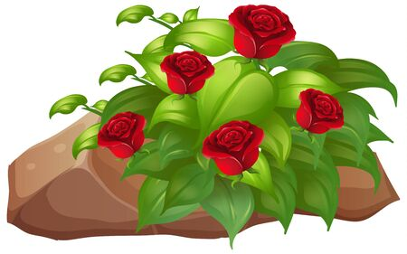 Red roses with leaves on white
