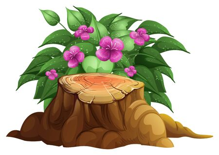 Puprple lily flowers with leaves illustration Ilustrace