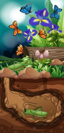 Nature scene with grasshopper and butterfly illustration
