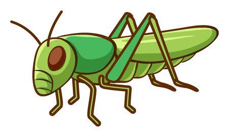 Grüne Grille auf weißer Hintergrundillustration Vektorgrafik