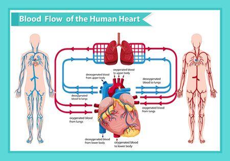 Scientific medical illustration of human blood flow illustration Banque d'images - 129253321
