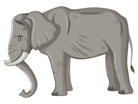 Skinny elephant on white background illustration