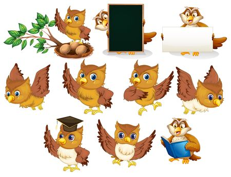 Brown owl in different poses on white background illustration