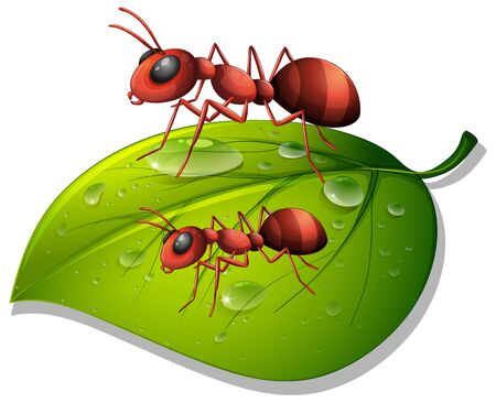 Red ants on green leaf on white background illustration Иллюстрация