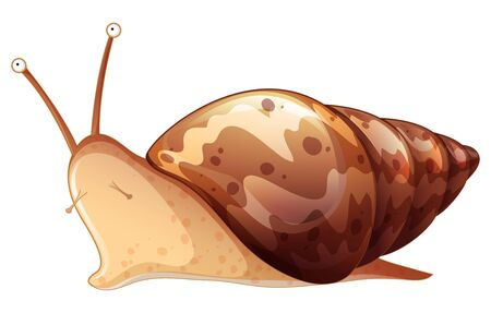 Brown snail on white background illustration