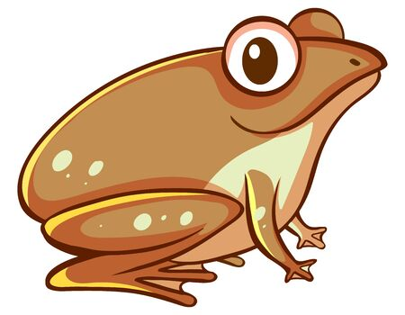 Brown frog on white background illustration