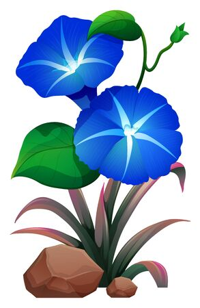 Blue morning glory and rocks on white background illustration