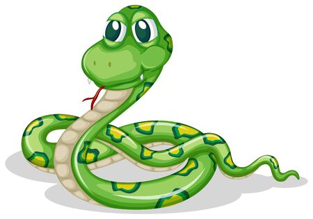 Green snake on white background illustration
