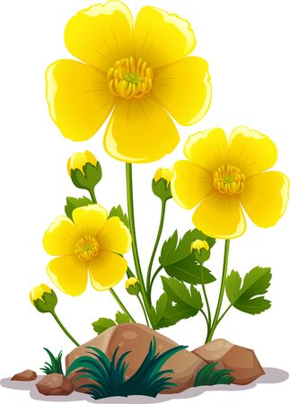 Yellow flowers and rocks on white background illustration