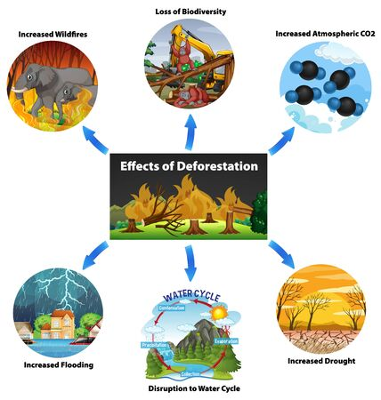 Chart showing effects of deforestation illustration