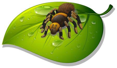 Tarantula spider on green leaf on white background illustration Çizim