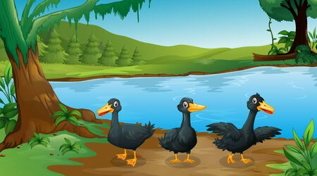 Scene with three black ducks by the river illustration