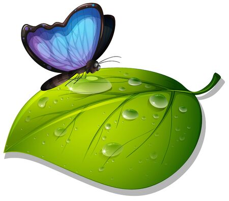 Blue butterfly on green leaf on white background illustration