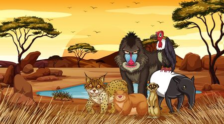 Wild animals in desert field illustration