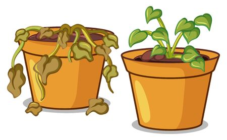 Two potted plants on white background illustration