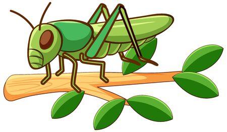 Grüne Heuschrecke auf weißer Hintergrundillustration