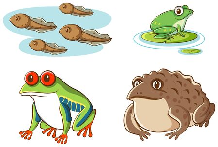 Isolated picture of tadpoles and frogs illustration