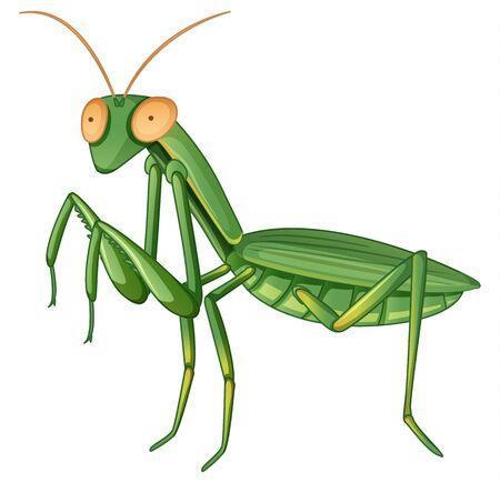 Gpraying mantis on white background illustration
