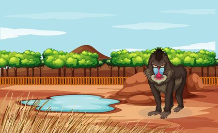 Scene with baboon in the zoo illustration Çizim