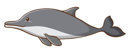 Gray dolphin on white background illustration