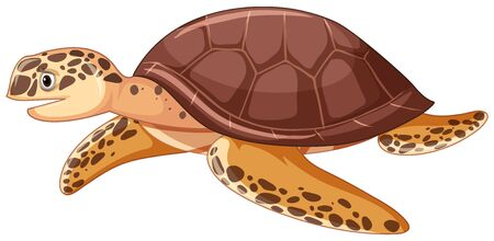 Sea turtle on white background illustration
