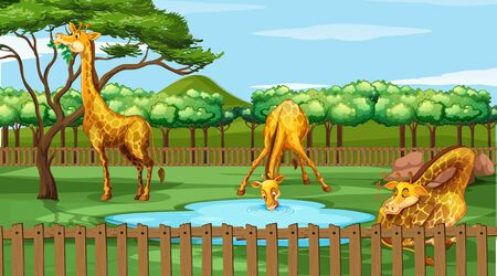 Scene with giraffes in the zoo illustration