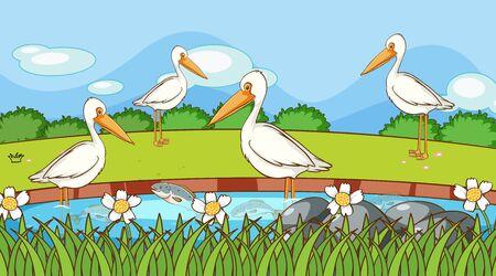 Scene with pelican birds in river illustration