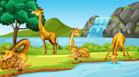 Scene with giraffes by the river illustration