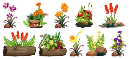 Large set of colorful flowers on rocks and wood illustration Illusztráció