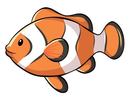 Pesce pagliaccio su sfondo bianco illustrazione Vettoriali