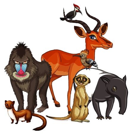 Isolated picture of many animals illustration Stock Illustratie