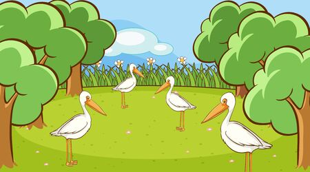 Scene with many pelican birds in the park illustration