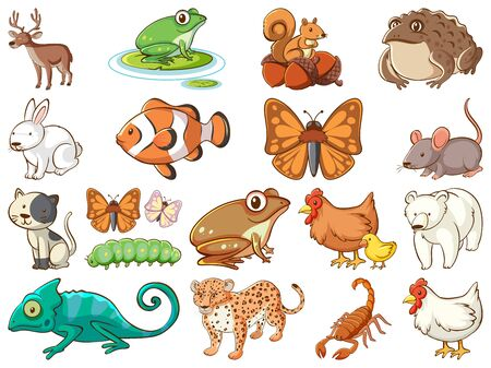 Large set of wildlife with many types of animals illustration