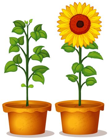 Two potted plant with green leaves and flower illustration