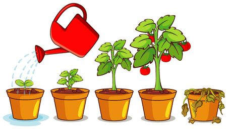 Diagram showing how plant grows from seed to tree Ilustración de vector