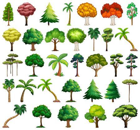 Conjunto de ilustración de árboles y plantas de variedad