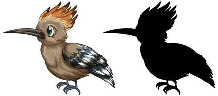 Roadrunner characters and its silhouette on white background illustration